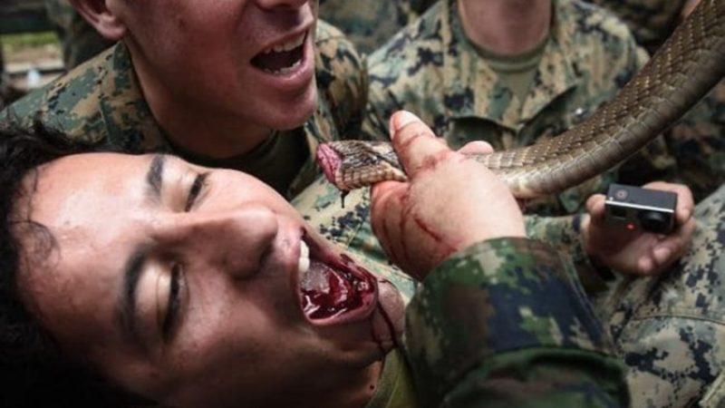 Manfaat Darah Ular Kobra dan Dagingnya
