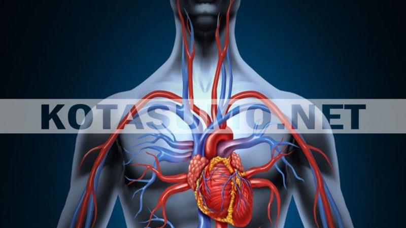 Fakta Jantung, Organ Tubuh Kita yang Paling Tangguh