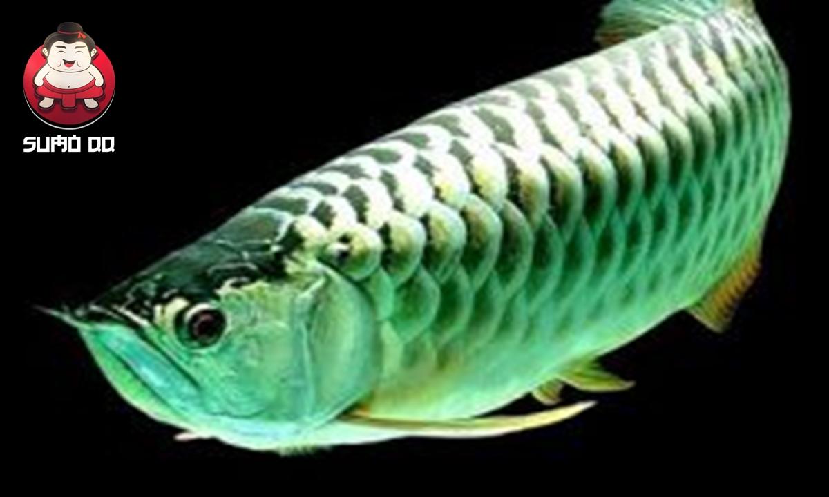 Jenis Ikan Hias Termahal di Dunia