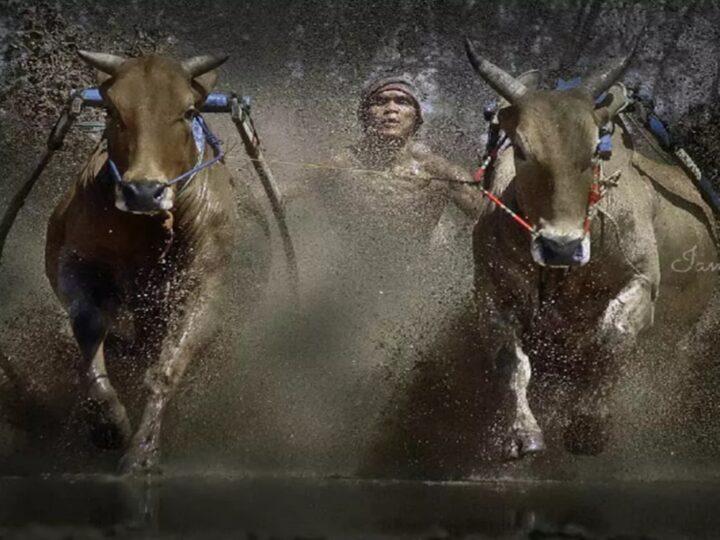 Olahraga Tradisional Minangkabau Yang Masih Ada Sampai Sekarang