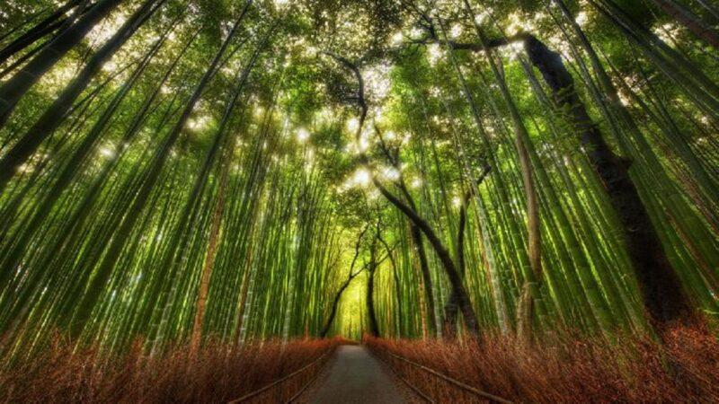 Wisata Hutan Bambu  Indonesia Berasa Di Jepang